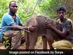 Baby Elephant Falls Into Trench, Rescued After 3 Hours In Tamil Nadu