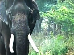Elephant Can't Be Kept For Luxury, Proper Place Required: High Court