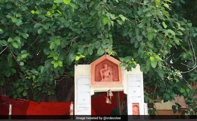 Kumbh Mela Quiz 2019: ये तस्वीर प्रयागराज में मौजूद किस 450 वर्ष पुराने वृक्ष की है?