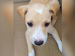 On Valentines Day, Puppy With Heart-Shaped Spot Waits For Home In Chennai