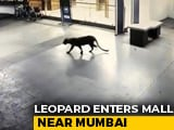 Video : Panic After Leopard Seen At Shopping Mall, Hotel Basement In Thane