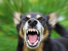 कुत्ते को बेरहमी से पीट रहा था शख्स, रोकने पर नहीं रुका तो युवक ने अन्य व्यक्ति को काटा और फिर...