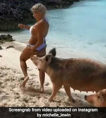 Model's Photoshoot At Pig Island Goes Very Wrong. Video Is Viral