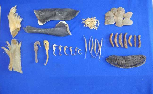 7 Crore Worth Dried Sea Horse, Sea Cucumber Seized In Chennai, 2 Detained
