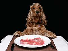 Why You Shouldn't Feed Your Pet Dogs Raw Meats