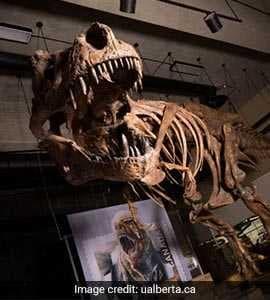 Tyrannosaurus Rex Found In Canada In 1991 Is World's Biggest