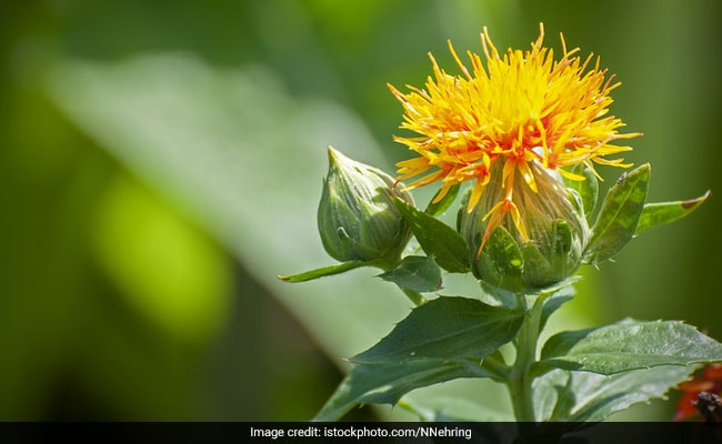 From Tanning To Acne And Wrinkles, The Many Benefits Of Safflower Oil Will Leave You Awestruck