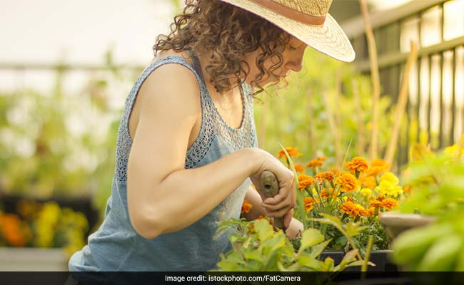 Home Gardens May Help Deal With Food Insecurity And Health Problems