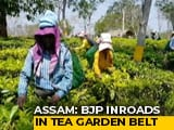 Video : In Assam Tea Gardens Hit By Tragedy, Free Liquor May Return Before Polls