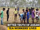 Video : Assam Liquor Tragedy Exposes Isolation, Neglect Of Tea Garden Workers