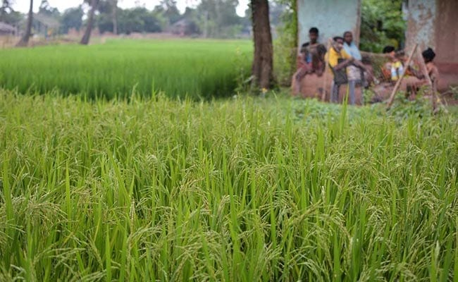 Calamity-Hit Farmers In Madhya Pradesh To Get Rs 5,000 As Minimum Aid