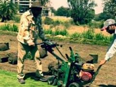 धर्मेंद्र खेतों में कोरियन घास लगाते आए नजर तो सनी देओल ने Instagram पर लिखा- मेरे पापा...देखें Video