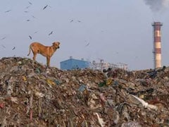 Green Court Asks Delhi Civic Body To Resolve Landfill Site Issue With DDA