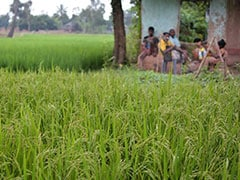 Maharashtra Farmer Allegedly Kills Self Over Weak Monsoon, Indebtedness