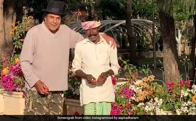 धर्मेंद्र खेत से लेकर आए दो बाल्टी टमाटर, फिर मिलवाया अपने 'हीरो' से... - देखें Video
