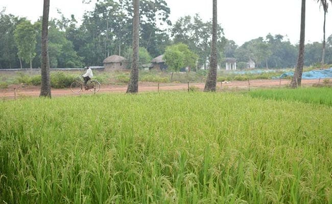 Agriculture Set To Cushion Economic Impact Of Covid-19 In 2020-21: Centre