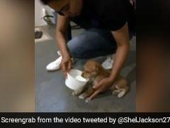 "Watch: Cricketer Helps Puppy ""In Distress"", Fans Applaud Him"