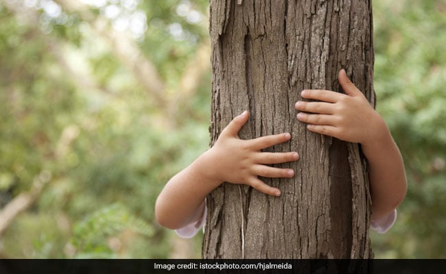Chipko Movement: When Villagers Hugged Trees To Save Them From Cutting