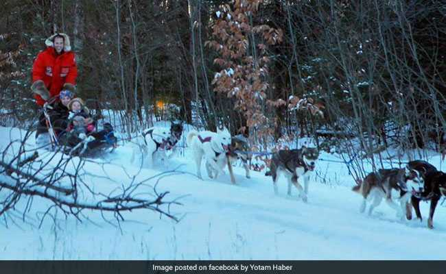 US Pianist Went Dog-Sledding. His Finger 'Broke Like A Twig' In Accident