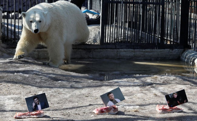Bears In Russian Zoo Become 'Poll Pundits', Predict Ukrainian Election