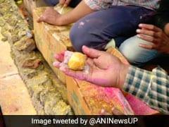 Photos: जब राधा रानी के मंदिर में होने लगी लड्डुओं की बरसात, बरसाना में यूं खेली गई 'लड्डू होली'