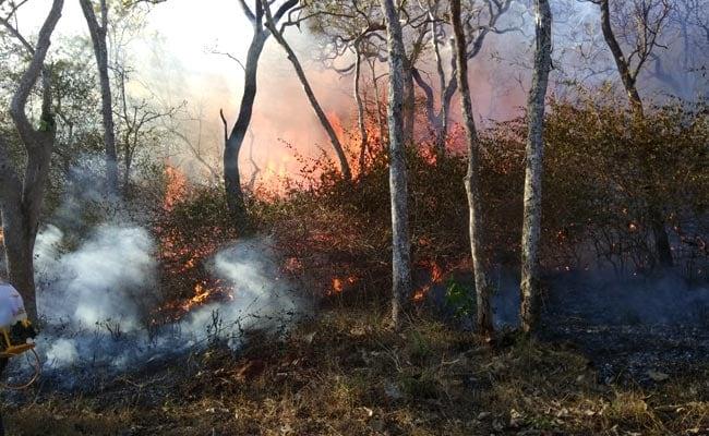 2 Villagers Arrested For Allegedly Lighting Bandipur Tiger Reserve Fire