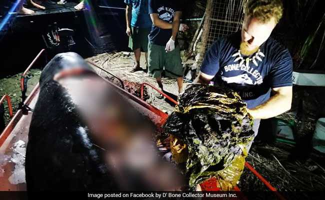 This Dead Whale's Stomach Had 88 Pounds Of Calcifying Trash