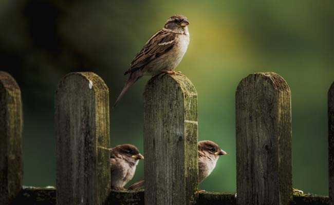 'Can't Feed Birds From Balcony,' Supreme Court Tells Flat Owner