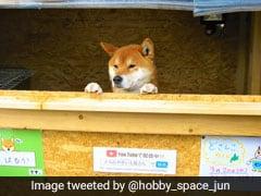 ये कुत्ता है दुकान का मालिक, खुद बैठता है गल्ले पर, ऐसे कमाता है रुपये, देखें VIDEO