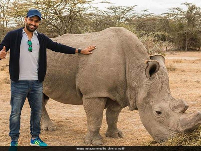 "World Wildlife Day: Rohit Sharma Vows To Speak Up For Those Who ""Don"