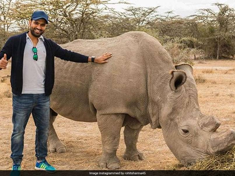 "World Wildlife Day: Rohit Sharma Vows To Speak Up For Those Who ""Dont Have A Voice"""
