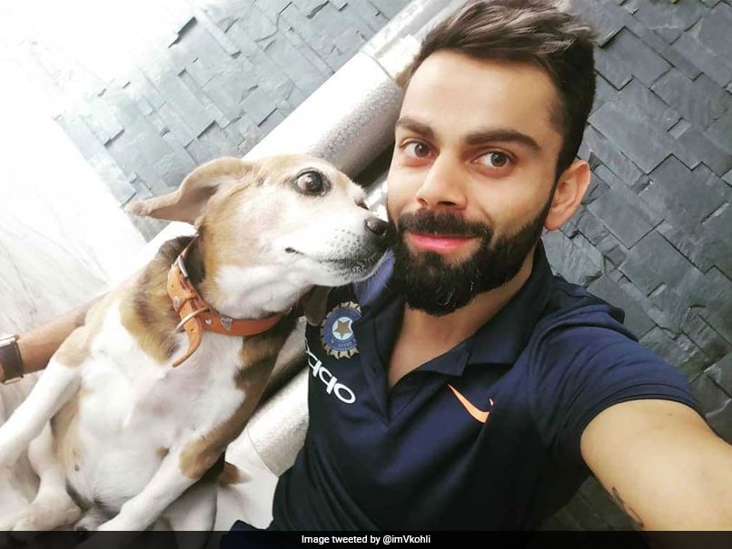 Virat Kohli Posts Picture With Dog As He Reaches Delhi For 5th ODI