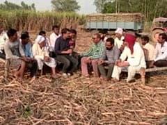 GROUND REPORT: यूपी की इन आठ सीटों पर कर्ज में दबे गन्ना किसानों का क्या होगा रुख?