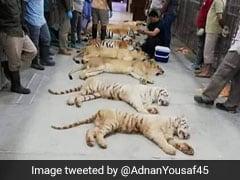 लाहौर ज़ू सफारी की बढ़ी रौनक,  यूएई ने पाकिस्तान को तोहफे में दिए 18 शेर और बाघ