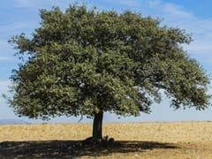 Coronavirus: अपने गांव लौटे प्रवासी मजदूरों को लेनी पड़ी पेड़ की शरण, घर वालों ने 14 दिन तक अलग रहने को कहा
