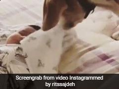 रोहित शर्मा की बेटी को लगी ठंड तो कुत्ते ने ऐसे ओढ़ाई चादर, वायरल हुआ क्यूट VIDEO