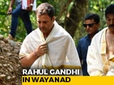 Video: Rahul Gandhi Visits Stream In Wayanad Where Father's Ashes Were Immersed