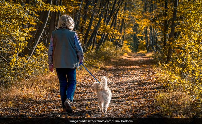 Just One Hour Of Walk Daily Can Help Prevent Disability In Older Adults