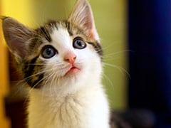 1 साल में 20 लाख बिल्लियों को मारेगी ये सरकार, खिलाएगी जहरीले सॉसेज, जानिए क्यों