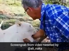 Video: Man Nearly Has His Arm Torn Off As He Tries To Stroke Caged Lioness