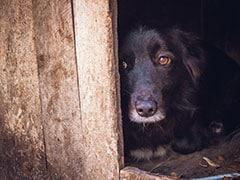 मालिक को कोबरा से बचाने के लिए टूट पड़े चार कुत्ते, खुद मरकर बचाई जान