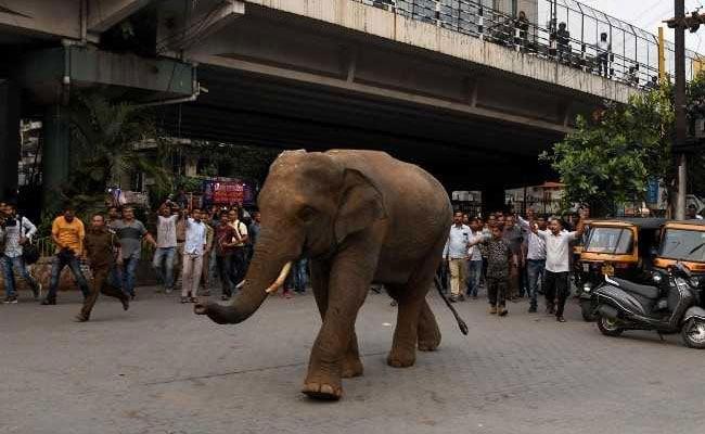 Wild Elephant Walks Down Guwahati Street, Stops Traffic; Residents Panic