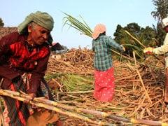 ये है महाराष्ट्र का वो गांव जहां पैसों की खातिर महिलाओं को निकलवाना पड़ता है गर्भाशय
