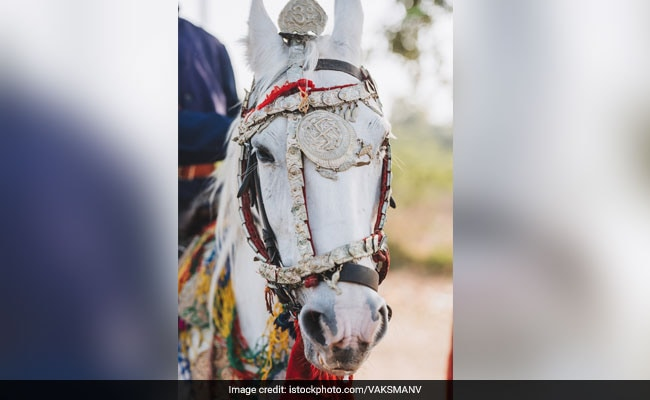 Candidate Rides Horse In Groom's Attire To File Nomination In UP