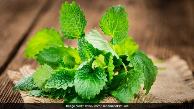 Summer Kitchen Hacks: How To Keep Mint Leaves Fresh For Longer
