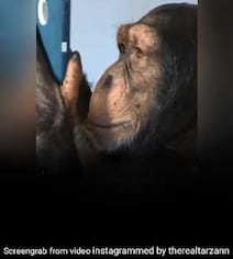 Chimpanzee Is Viral For Using Instagram Like A Pro, Video Stuns People