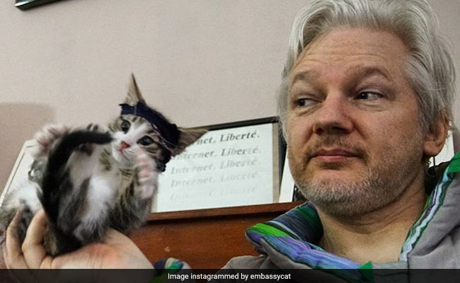 The Mystery Of Julian Assange's Cat: Where Will It Go? What Does It Know?