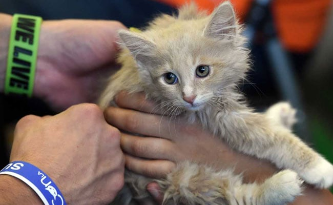 US Agriculture Department Closes 'Kitten Slaughterhouse' After Outcry