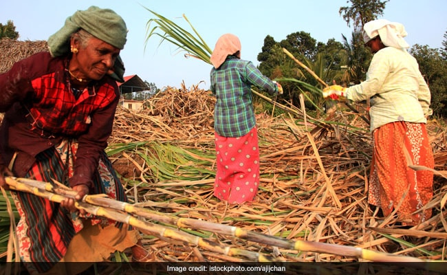 'Will Transform Lives': UP Hikes Sugarcane Prices Ahead Of 2022 Assembly Polls