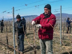 Grapes On Mars: Georgia Winemakers Aiming High